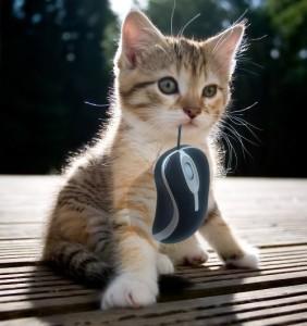 Cat-1-Mouse-0---51004