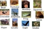 Animales en inglés – español – Lista con más de 201 animales