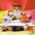 Comidas en inglés: hora de Comer