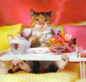 desayuno-gato