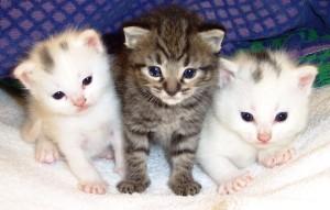 filhote-gatos
