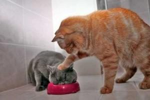 fotos-de-gatos-chistosos-5