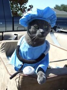 gato-disfraz-doctor