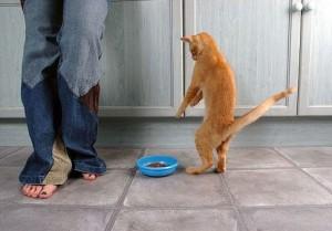 homemade-cat-food