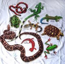 Reptiles en inglés