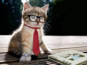 Gato estudiante
