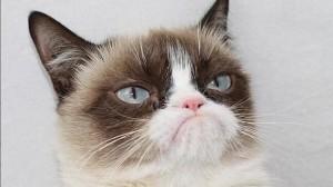 gata-grunona-grumpy-cat--644x362