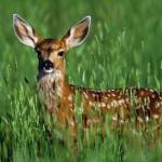 Vocabulario de animales en inglés – Lista con más de 220 animales