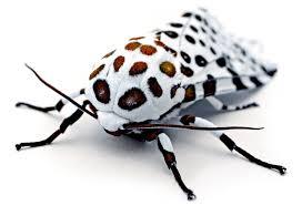 Nombres de insectos en inglés