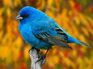 Bird | Pájaro