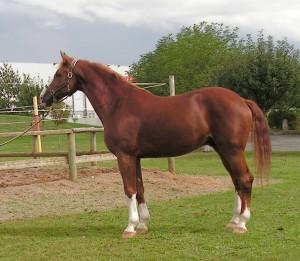 Caballo | Horse